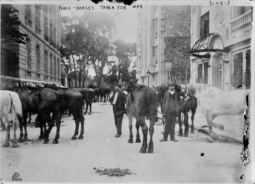 Horses in Paris (2)